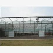 供应福建厦门温室大棚,蔬菜大棚,卡簧卡槽,薄膜大棚,钢管大棚,科研温室