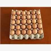 烟台鸡蛋托盘设备,鸡蛋纸托盘,蛋托机,鸡蛋托,山河塑业多年实践经验雄厚实力