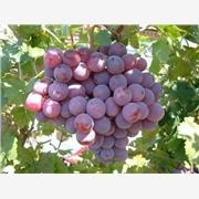 供应酿造葡萄果醋生产线项目