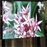 广西玉林LED显示屏的颜色的不同|传信光电电有限公司