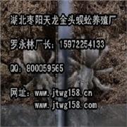 云南蜘蛛养殖基地—贵州贵阳蜈蚣养殖场