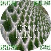 江苏生态植草型土工模袋混凝土护坡公司