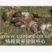 害虫治理喷雾设备专家灭鼠,广州灭鼠,天河灭鼠,工厂灭鼠,物流灭鼠,大厦灭鼠,学校灭鼠食品防虫园林除虫