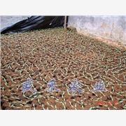 山东花卉育苗厂家,新一代花卉营养土,花卉育苗价格-寿光盛禾农业