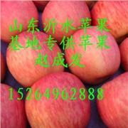 山东苹果基地供应各种苹果