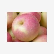 供应山东红富士苹果大量上市