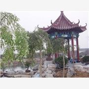 园林苗木供应商——潍坊丽景园林有限公司
